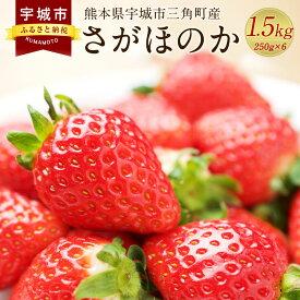 【ふるさと納税】数量限定 熊本県 宇城市三角町産 さがほのか 250g×6パック いちご 合計1.5kg フルーツ 果物 送料無料