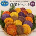 【ふるさと納税】熊本県天草崎津産緋扇貝(ひおうぎがい)彩り20枚