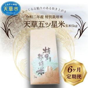 【ふるさと納税】【6ヶ月定期便】令和2年産 特別栽培米 天草五ッ星米 玄米 5kg