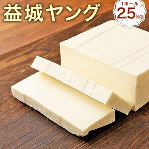 【ふるさと納税】益城ヤング 2ヵ月熟成タイプ 1ホール 約2.5kg チーズ セミハードタイプ ブロック おつまみ トッピング 乳製品 冷蔵 送料無料