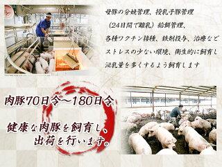 都城産「きなこ豚」定期便(10ヶ月)