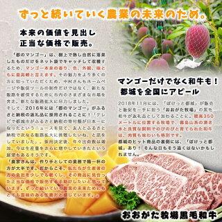【先行受付!】宮崎完熟マンゴー2〜3玉(都城産)