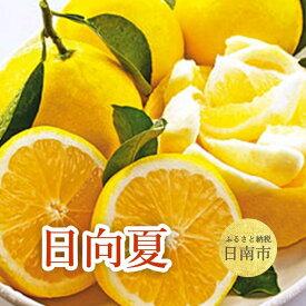 【ふるさと納税】 日向夏 2.5kg(9〜12玉)