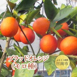 【ふるさと納税】 ブラッドオレンジ・モロ アントシアニンを含有、鮮やかな濃赤色の果実です。