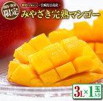 【ふるさと納税】≪期間・数量限定≫みやざき完熟マンゴー(3L×1玉)フルーツ果物
