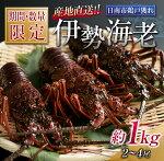【ふるさと納税】≪期間・数量限定≫伊勢海老(約1kg・2~4尾)魚介海鮮えび