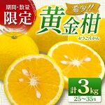 【ふるさと納税】≪期間・数量限定≫希少!!黄金柑<おうごんかん>(計3kg)フルーツ柑橘