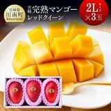 【ふるさと納税】完熟マンゴー『レッドクイーン』(合計1kg以上)