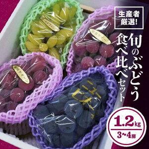 【ふるさと納税】生産者がオススメ!旬のぶどう食べ比べセット!3〜4房で1.2kg