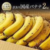 【ふるさと納税】そのままガブリ!皮まで食べられるバナナ「NEXT716」10本入り