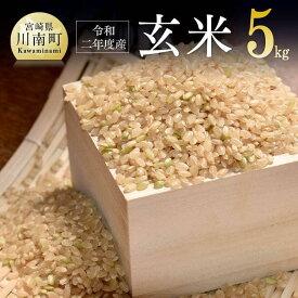 【ふるさと納税】※新米※『令和元年産』農家直送!玄米(こしひかり)
