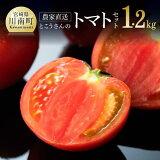【ふるさと納税】農家直送「とこうさんのトマト12個セット」