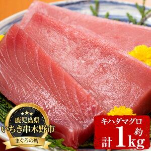【ふるさと納税】天然キハダマグロ (約1kg)柵でお届け!肉厚のお刺身や海鮮丼に!【海鮮まぐろ家】