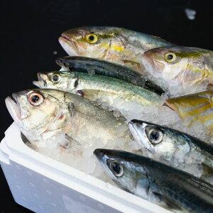 【ふるさと納税】【漁港直送】朝獲れ鮮魚 詰め合わせ 4kg