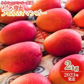 【ふるさと納税】【2022年発送】カネシロマンゴー農園の完熟マンゴー約2kg