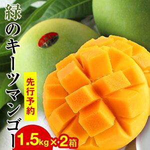 【ふるさと納税】緑のキーツマンゴー1.5kg×2箱【先行予約】【2021年8月下旬〜9月頃発送】