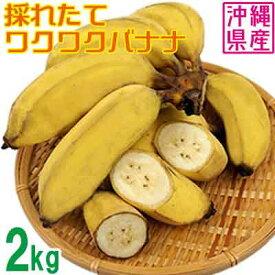 【ふるさと納税】【沖縄県産バナナ】採れたてワクワクバナナ 2kg