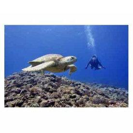 【ふるさと納税】ダイビングパラダイス!久米島で体験ダイビング【1名様】