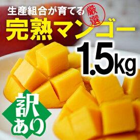 【ふるさと納税】【訳あり品】生産組合が育てる厳選・完熟マンゴー約1.5kg