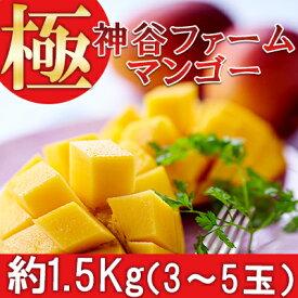 【ふるさと納税】【2021年発送】神谷ファームのマンゴー(極)約1.5Kg