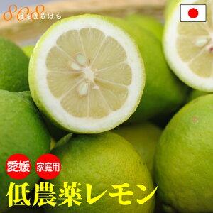 低農薬 国産 レモン 10kg 訳あり 愛媛 瀬戸内 大三島 ore 10g SSS