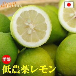 低農薬 国産 レモン 10kg A品 愛媛 瀬戸内 大三島 ore 10g SSS