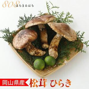国産 松茸 ひらき 小さめ 約230g 2〜8本程度 まつたけ マツタケ 岡山 SSS 10j