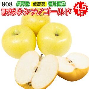 【2021年11月出荷】訳あり 減農薬 長野 シナノゴールド りんご 約4.5kg 8〜25個入 C品 リンゴ 林檎 産地直送 小山 SSS 11j