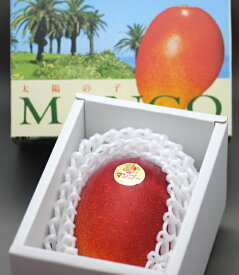 2020年分予約 減農薬 マンゴー 太陽の子 3L 大玉1玉 450〜500g 化粧箱入 贈答用 ギフト 宮崎 産地直送 SSS