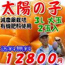 減農薬 マンゴー 太陽の子 大玉 3L 2玉 約1kg 化粧箱入 贈答用 父の日 ギフト 宮崎 産地直送