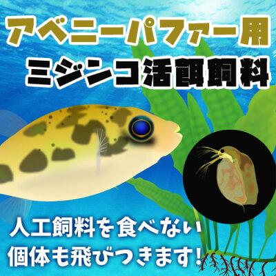 (熱帯魚活餌)(オススメ)アベニーパファー用ミジンコ400ml(100匹〜)【水槽/熱帯魚/観賞魚/飼育】【生体】【通販/販売】【アクアリウム】