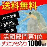(熱帯魚活餌)(オススメ)送料無料ダフニアミジンコ1000ml(250匹〜)【水槽/熱帯魚/観賞魚/飼育】【生体】【通販/販売】【アクアリウム】
