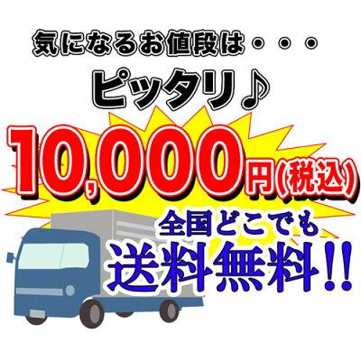 ★スーパーSET13点60cm水槽セット★大ボリュームで大満足!【新着】