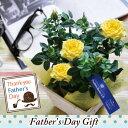 遅れてごめんね【あす楽】 2018父の日黄色バラ鉢植え☆おまかせカゴ付き 【+700円でカステラセットも可能】父の日ギフト 父の日 バラ …
