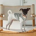 【犬服】【ドッグウェア】ヘヴィジャージスウェットタンクツートン犬服おしゃれシャツ高級シンプルラガーシャツいぬ洋服ウェアドッグ