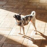 【犬服】【ドッグウェア】モスキートリパレントタンクSS/S