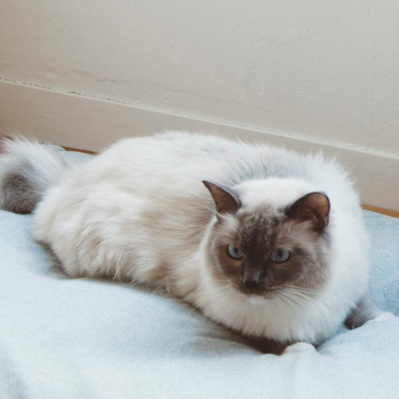 コットン ジャージ スクエア ベッド Mサイズ 猫