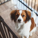 【犬 サークル】サークル シート レクタングル XLスチール製 ケージ ゲージ 簡単 かんたん ドッグ犬用品 サークル スタイリッシュ
