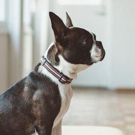 【犬 首輪】フレッシュ ストライプ カラー S サイズ 小型犬犬 首輪 犬首輪 小型犬 中型犬用 シンプルベーシック 犬の首輪 いぬ、くびわ
