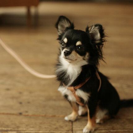 【犬 リード】オリジナル ヌメ リング リード S サイズ 犬リード 犬 リード 小型犬 中型犬 革 皮 革製 レザー おしゃれ 犬のリード 犬リード 犬リード小型犬 チワワ