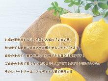 【送料無料】【実なし】とにかく根がガッチリ!レモン苗レモンの木「とげなしレモン」13.5cm(4.5号)ポット樹高約60〜70cm接ぎ木3年生苗トゲナシレモン棘なしレモン