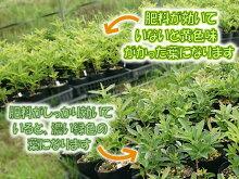 【なるこ有機入り3号(5-5-5)】有機質を贅沢に配合ツツジ・シャクナゲに相性抜群!約2kg