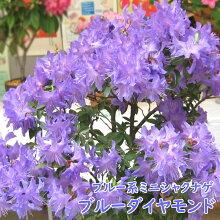 開花イメージ