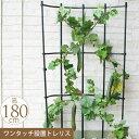 園芸 お花のアスレチック 巻き巻き トレリス 幅60cm×高さ180cm ガーデニング 家庭 菜園 庭 ベランダ 簡単 設置 組立