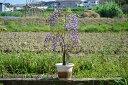 Kokuryuufuji4201
