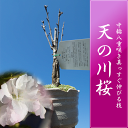 Amanogawa1