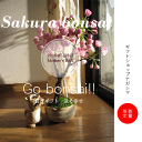 Sakura_18_2