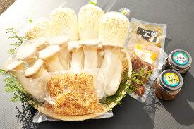 鳥取県産 きのこセット(大) 北村きのこ園 産地直送 詰め合わせ エリンギ えのき 要冷蔵 他のメーカー商品との同梱不可 ギフト お歳暮 父の日