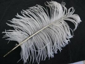 オーストリッチ テイル 25〜30cm (白) この羽根はディスプレイ、アクセサリー、ヘットドレス等に使用されてます。
