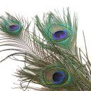 孔雀 3本 【装飾用】 羽根 【フェザー パーツ 手芸 アクセサリー 羽 羽根飾り アクセサリ しゅげい】